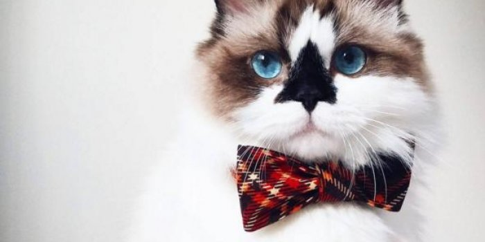 Albert Baby Cat : le chat star d'Instagram a toujours la classe !